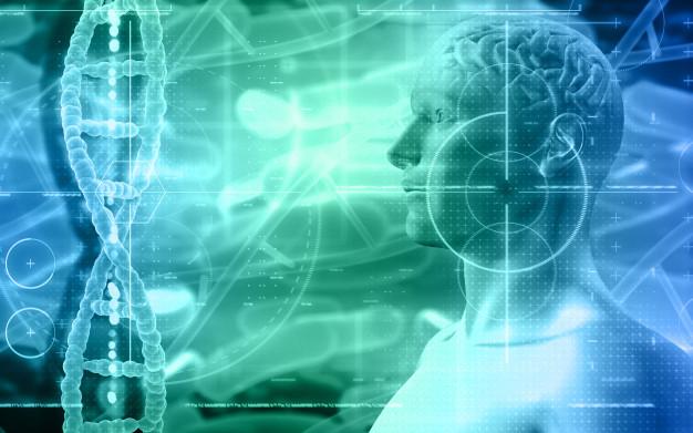 Organ Berinteraksi Dengan Otak