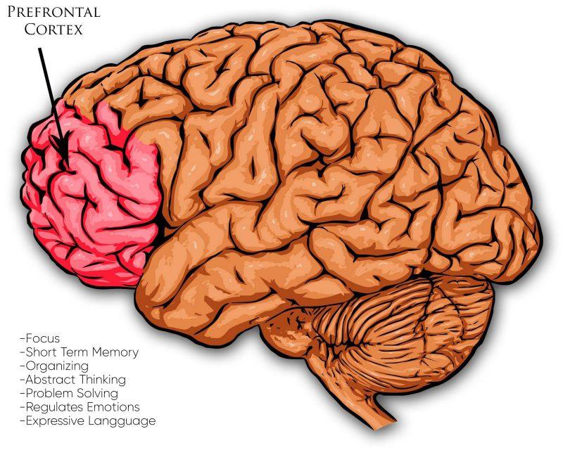 Obesiti vs Otak